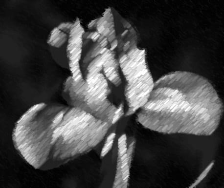 deGranero dibujar plantas y flores
