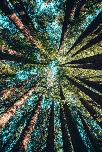 deGranero dibujar árboles